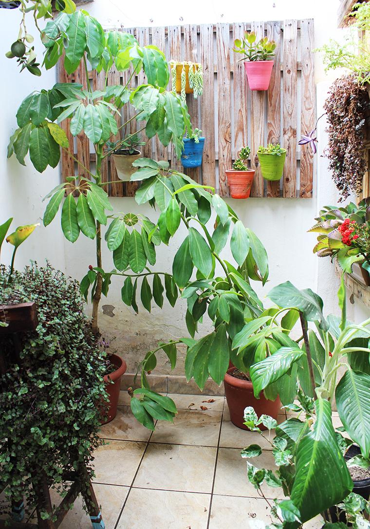 decoração-com-plantas12