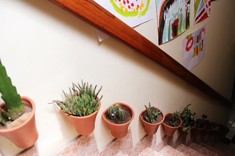 decoração-com-plantas17