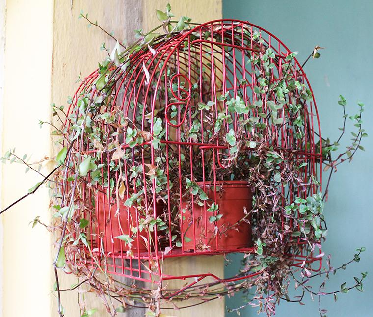 decoração-com-plantas4