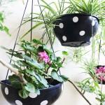 decoração-com-plantas1