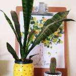 vaso abacaxi diy a casa que a minha vo queria (9)