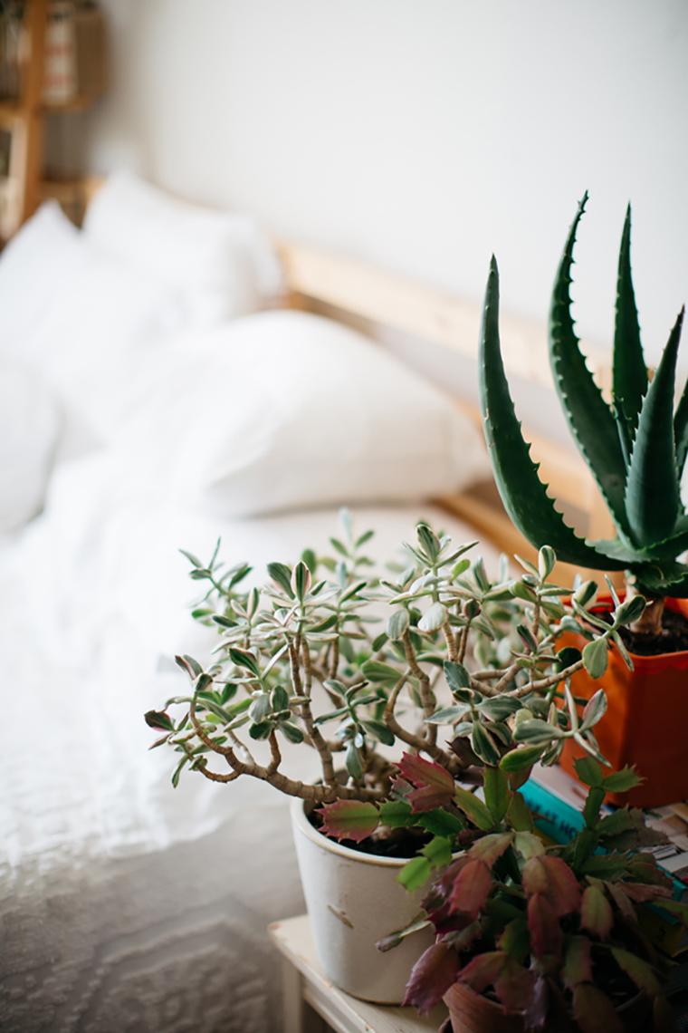 Plantas dentro de casa 12