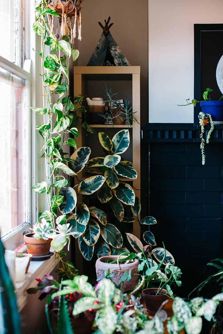 Plantas dentro de casa 5