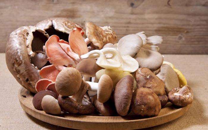 cogumelos 1