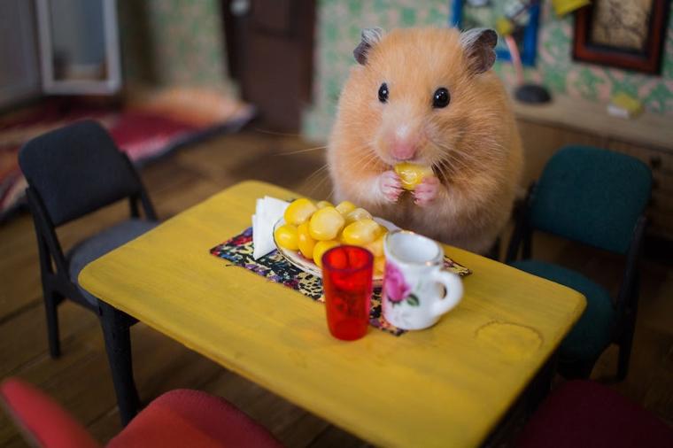 cidade em miniatura de hamster12
