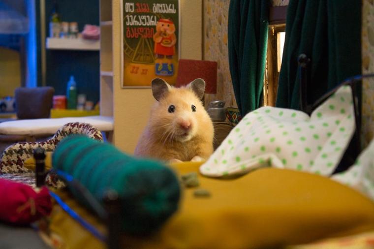 cidade em miniatura de hamster13