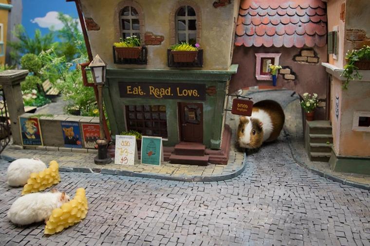 cidade em miniatura de hamster14