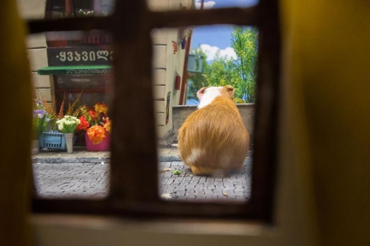 cidade em miniatura de hamster15