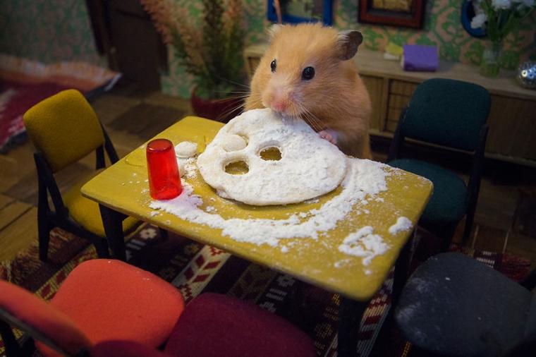 cidade em miniatura de hamster20