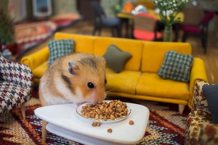 cidade em miniatura de hamster7