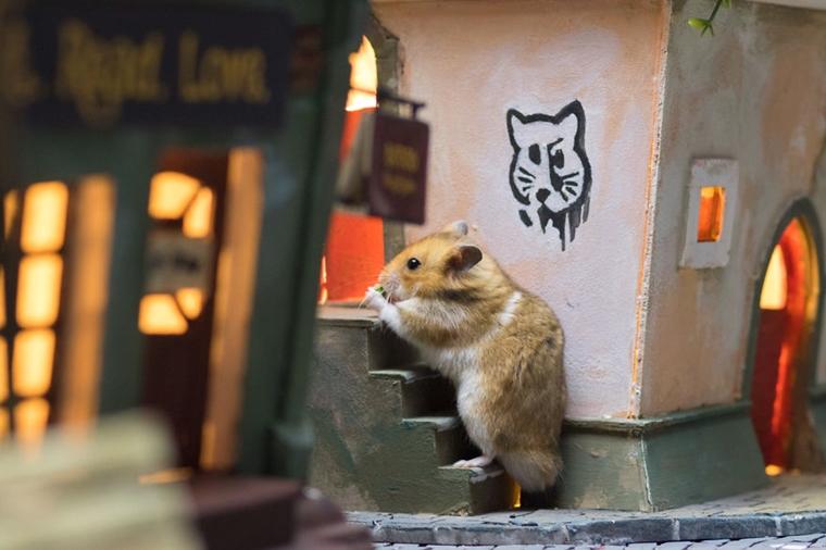 cidade em miniatura de hamster9